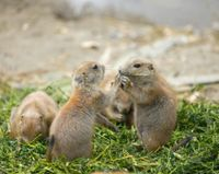 Don't Force Private Landowners to Kill Prairie Dogs!