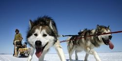 Justice for 100 Murdered Sled Dogs