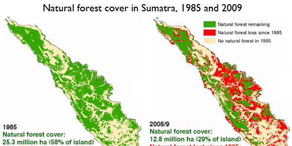 PROTECT FORESTS IN SUMATRA ! PLEDGE TO ENLARGE NATIONAL PARKS