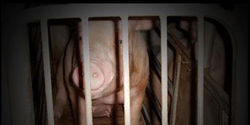 Ask Manitoba Pork to phase out sow stalls by 2017