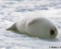 S.O.S.- Save our seals!