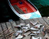 Singapore - Take Shark Fins off the Menu