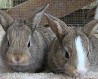 Urge Tractor Supply to Stop Selling Baby Rabbits