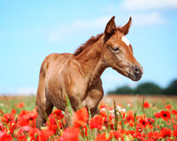 Keep Horse Slaughter Out of Maine