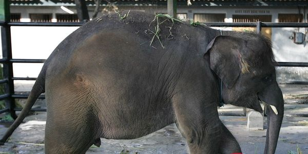 PLEASE HELP THE ANIMALS IN INDONESIA'S SURAYABA ZOO - VERY URGENT PLEASE!