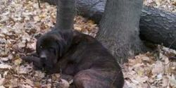 Demand Tougher Punishments For Animal Cruelty In The US!
