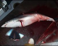 Ban shark finning in New Zealand waters and outlaw the trade in shark fin products