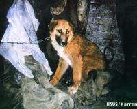 Ban dog and cat fur