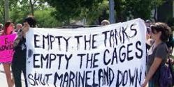 Vote for Orca Conservacy to Help Marineland Whistleblowers by signing up at the PROVIDED LINK
