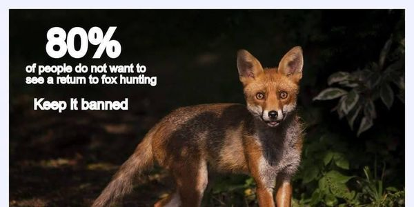 petition ceredigion people against fox hunting