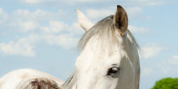 Congress: Ban Horse Slaughter in the U.S. for Good!