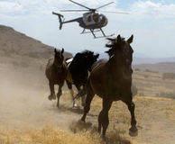 Say NO to Horse Slaughter Factory in Nevada