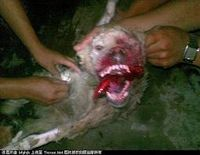 STOP THE USE OF DOGS AND CATS FOR FUR AND TO PERMANENTLY END THE HORRIFIC CONDITIONS IN CHINA�