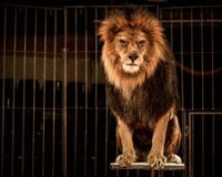 Ban the Use of Wild Animals in US Circuses