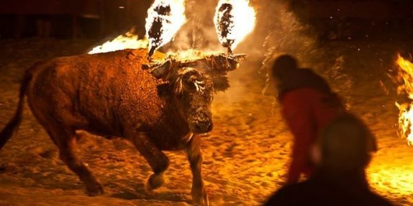 Bull with horns set on fire