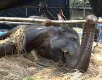 Justice for the Death of Bijlee, the Elephant