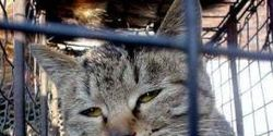 Urge China to introduce an Animal Protection Law