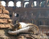 Stop Eviction of a Roman Cat Sanctuary