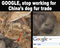 Google, Ban Fur! Stop Advertising Puppy Fur!