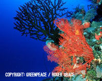 Save the Great Barrier Reef from Surging Coal Exports