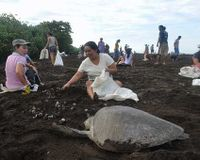 Stop sea turtle egg harvesting