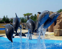 Do Not Renew Licence for Marineland