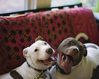 Maryland, Overturn Your Dangerous Pit Bull Rule