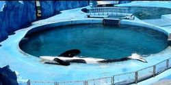 Freedom for Tilikum and Kshamenk~Friday, July 4 ~A Red Letter Day For Dolphins
