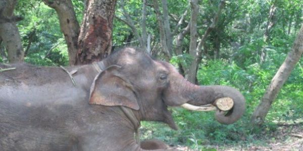 Arrest Sunder the Elephant's Abusers!