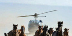 Tell Secretary Salazar: Stop Selling America's Wild Horses for Slaughter