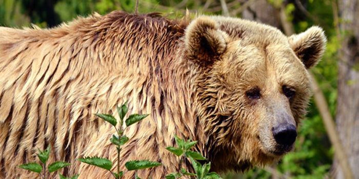 petition: Demand Yellowstone Grizzly Cubs be sent to Rehab, not Zoo