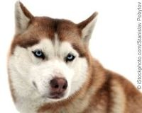 Demand Justice for Dog Who Suffocated During Iditarod!