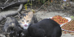 Reject Ordinance to Care for Cat Colonies