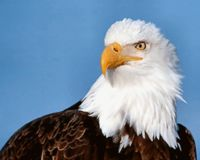 TAKE CARE OF THE BALD EAGLE IT'S