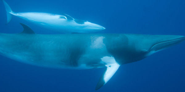 End Whaling in Iceland