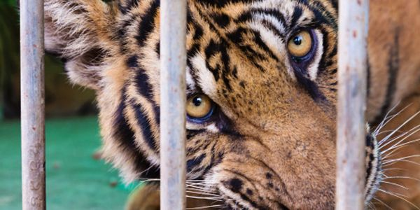 Congress: End the Suffering of Wild Animals in Traveling Circuses for Good