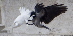 Tell the Pope to Stop Releasing Peace Doves!