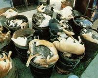 Animal cruelty under the Guise of