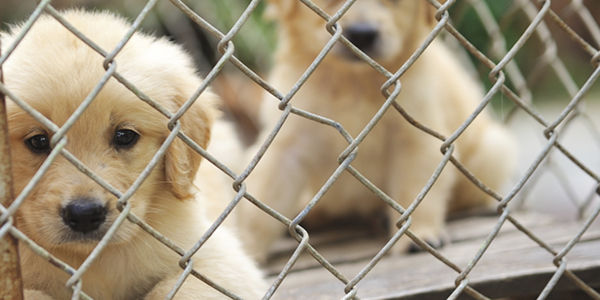 Stop Puppy Mills -- It Starts With YOU