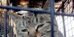 China: Ban dog and cat meat