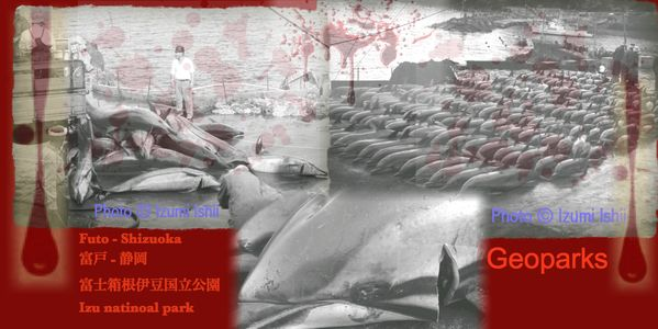 Please ask Futo to promise to ban their cruel dolphin drive hunting!