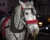 NYC- Ban Horse Carriages
