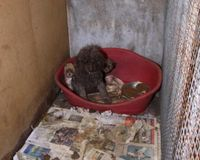 stop sending puppy mill dogs to singapore