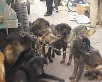 LET US STOP THIS BRUTALITY- (DOGS AND CATS IN CHINA) WITH OUR HUMANITY AND THE HELP OF THE UNITED NATION.