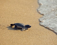 Protect Baby Sea Turtles from Beach Drivers