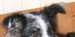Stop the death sentence of the horses Saar and Noortje, Border Collie Casey