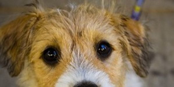 Fire Police Officer Who Killed Girlfriend's Puppy Because It Soiled Carpet