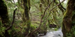 Protect Tasmania's Native Forests!