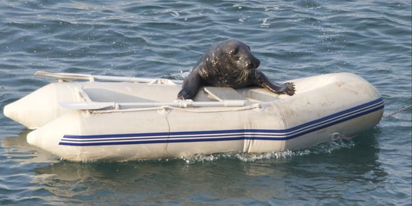 Windo the friendly seal on a raft