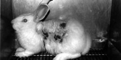 Put an END to Animal Testing